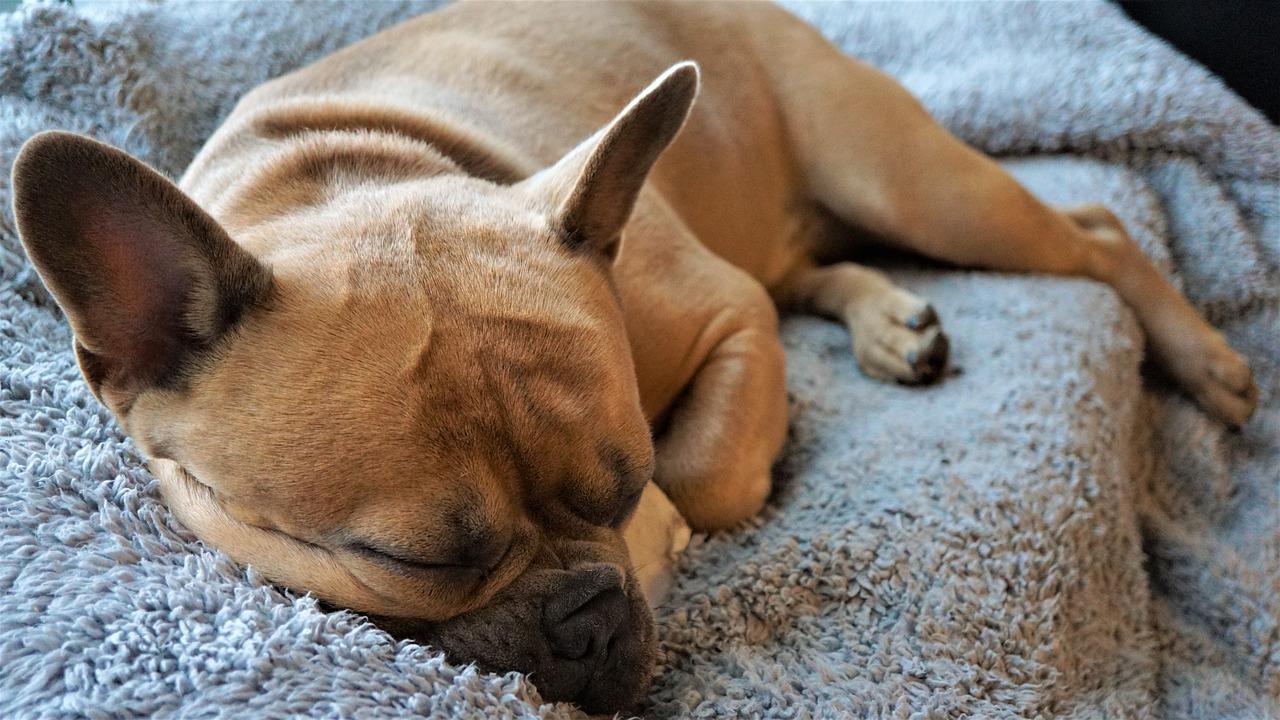 【愛犬がヘルニアになった!?】その治療法と飼い主ができることとは