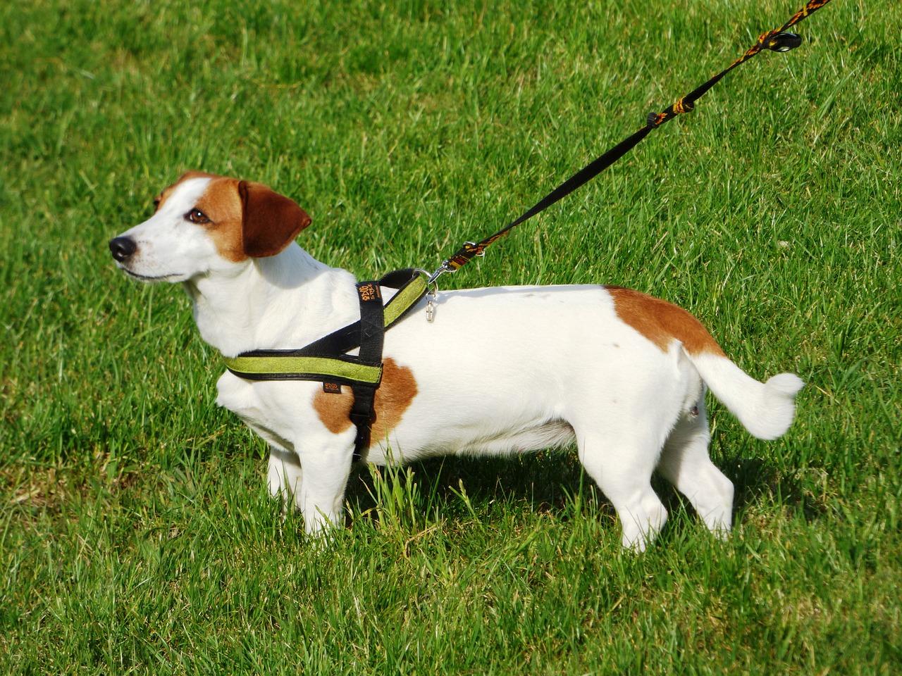 絶対にやっておくべき犬のしつけ方!犬のしつけ方を徹底解説!