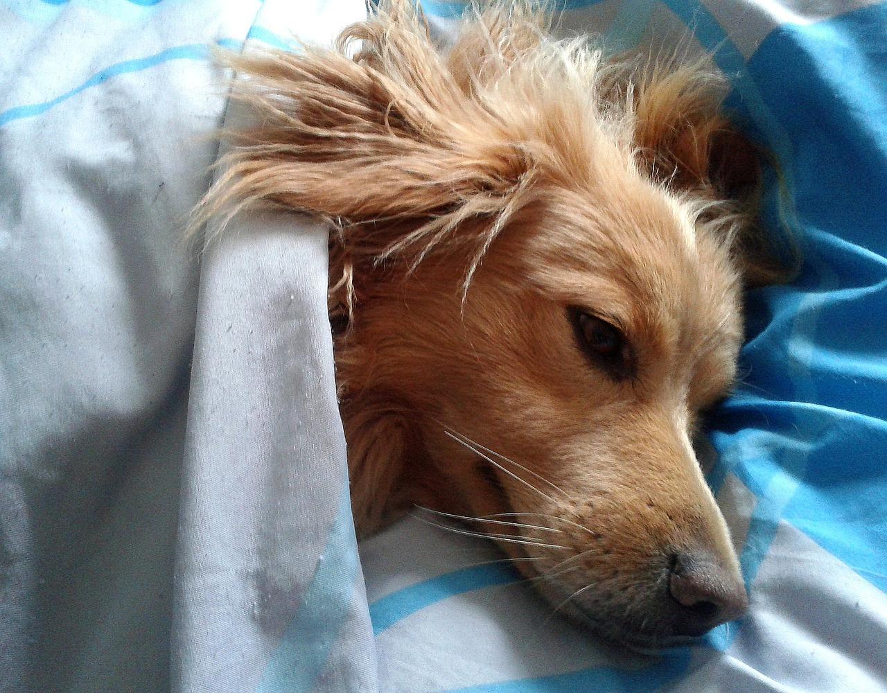 愛犬のその動き老衰の始まりかも!?老衰に見られる症状とは