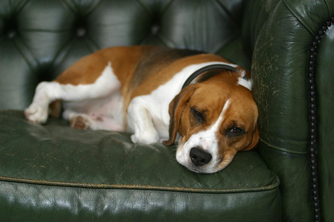 愛犬に元気がないのはどうして?その原因と元気になるための方法とは