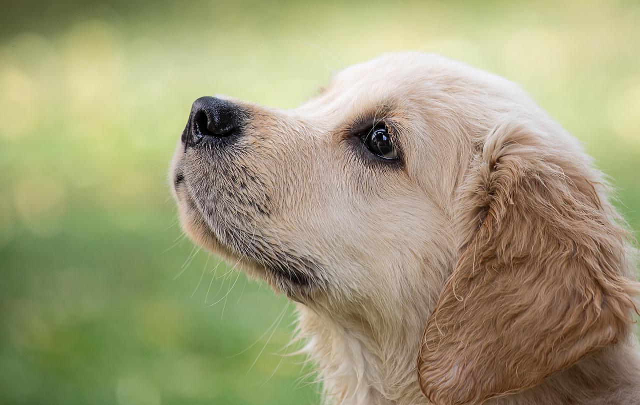 犬の嘔吐の対処法第5選!犬が嘔吐した際の対処法について紹介
