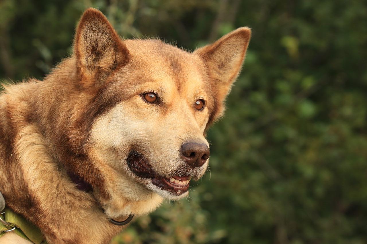 【愛犬がご飯を食べない!?】食を促すための5つの対策を徹底解説!
