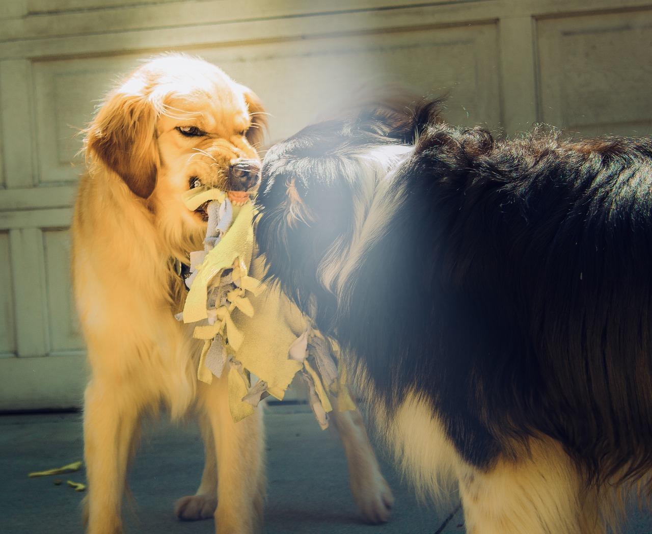 犬が喧嘩してしまうのはなぜ?犬の喧嘩を止めさせるやり方を紹介