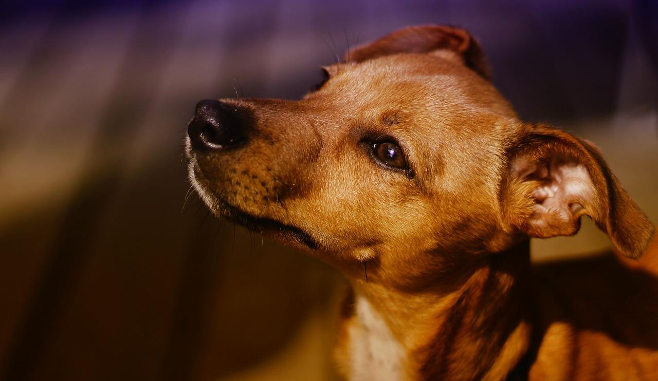 その動きは認知症かも!?犬の認知症の特徴とその対策を紹介