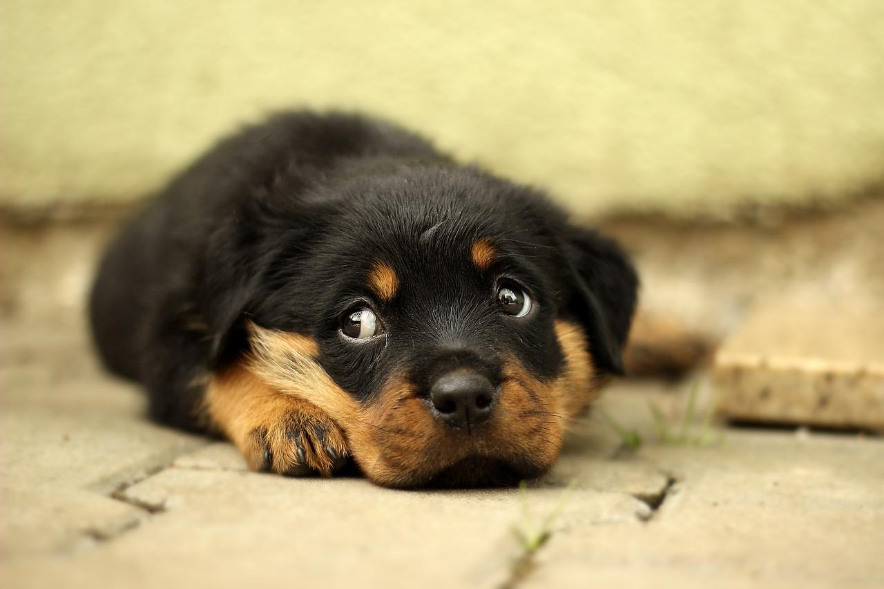 犬の血便はストレスによるもの!?それとも病気?飼い主がすべきこととは