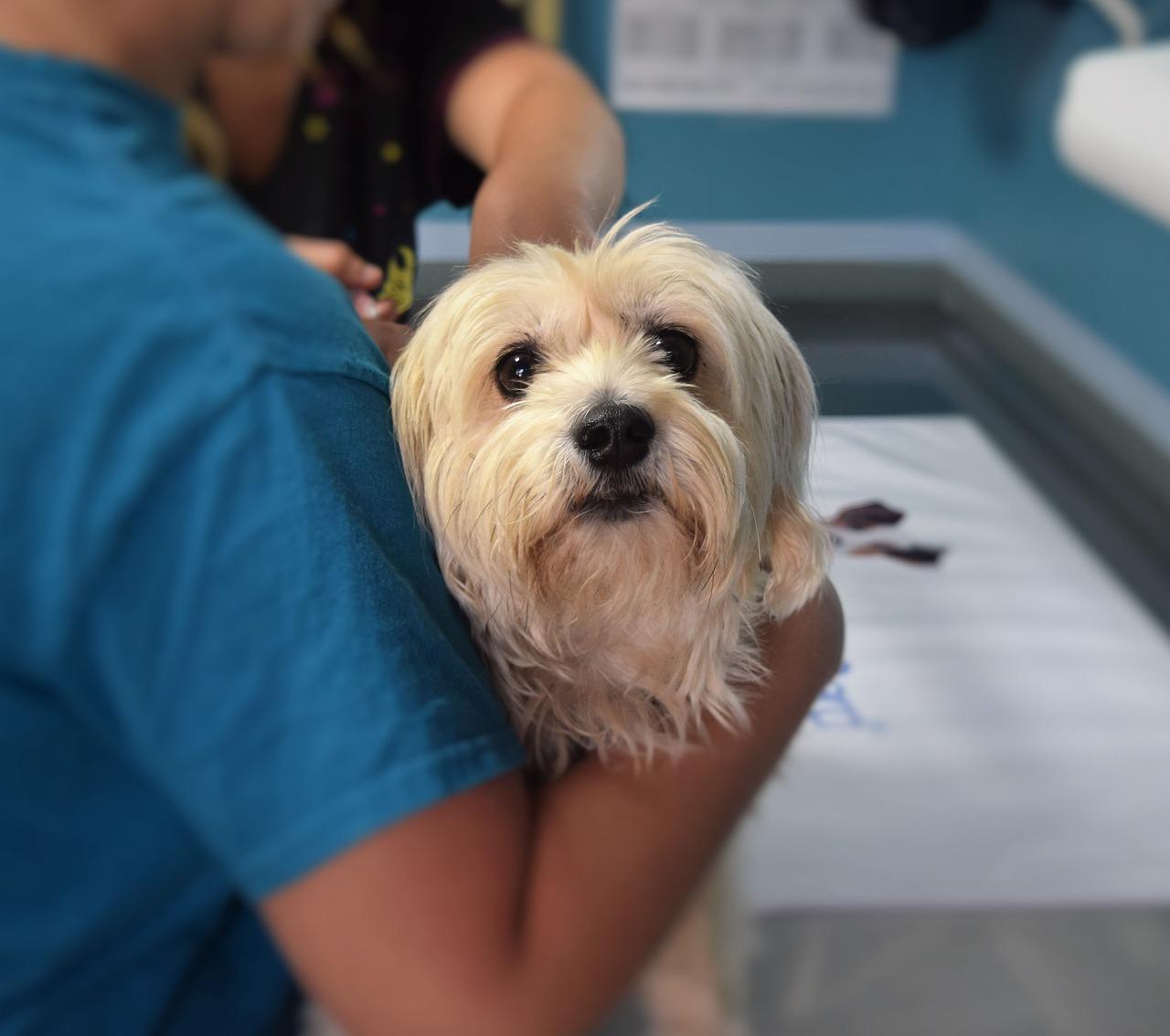 動物病院で治療中の犬