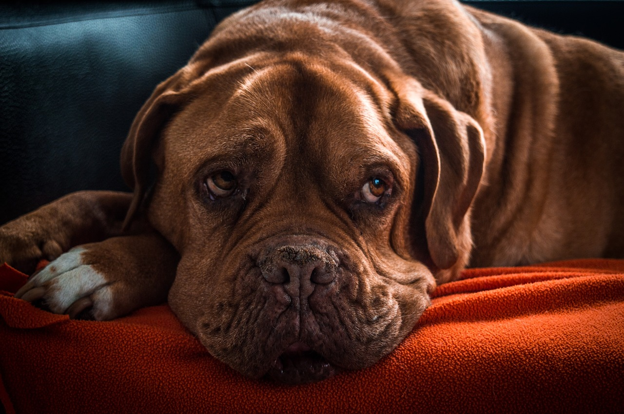 犬がため息をつく理由3選!ため息をつく本当の意味とは