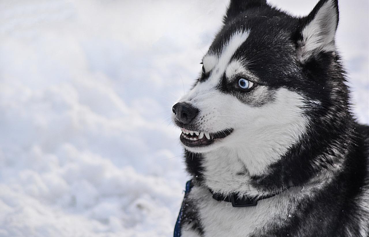 犬が怒って嚙みつこうとした!犬が怒る理由とは一体なに?