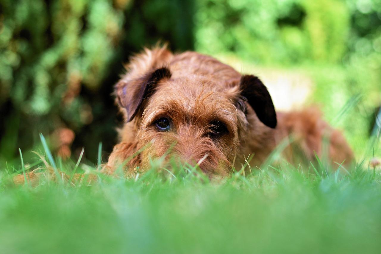 愛犬をマダニから守る!飼い主が愛犬のためにできることとは