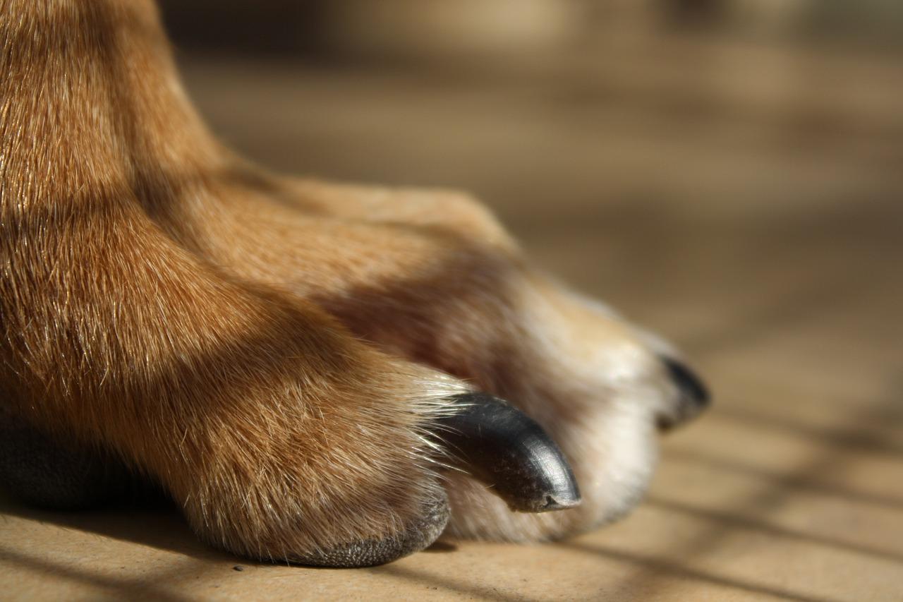 愛犬が嫌がらない爪切り法とは?正しい爪の切り方と頻度を解説