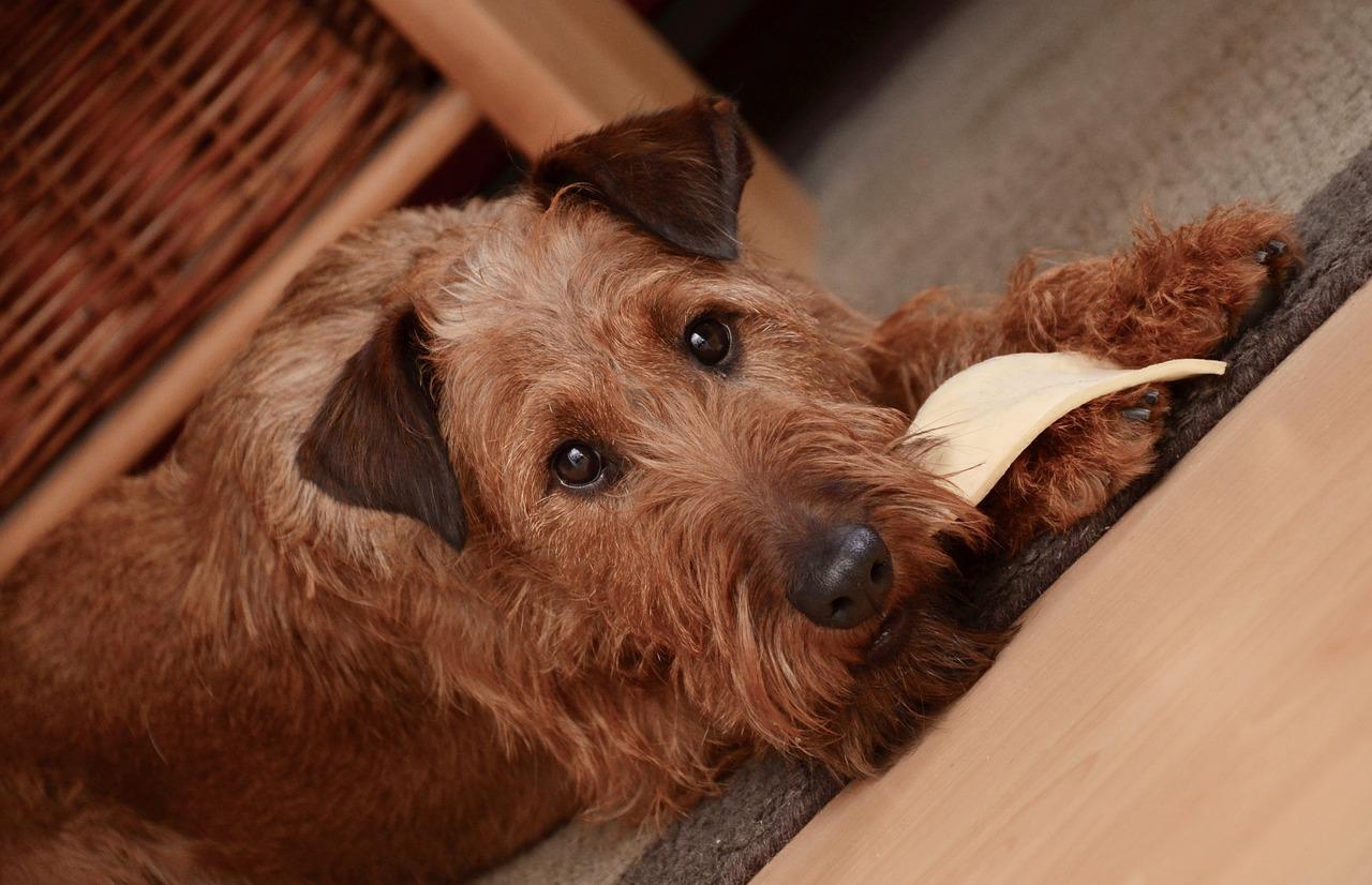 愛犬が玉ねぎを食べてしまった!食べてしまった際の対処法を紹介