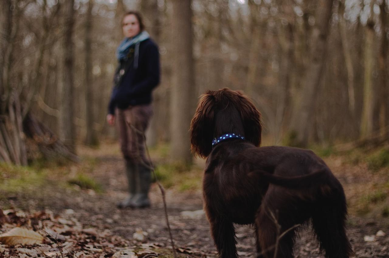 犬が散歩中に歩かないのはコレ!考えられる原因と対処法を解説!