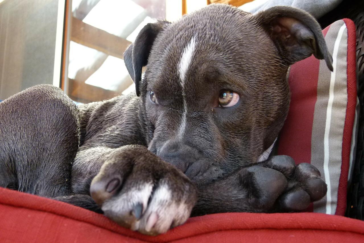 愛犬が足を舐めるのはなぜ?犬が足を舐める5つの心理を紹介