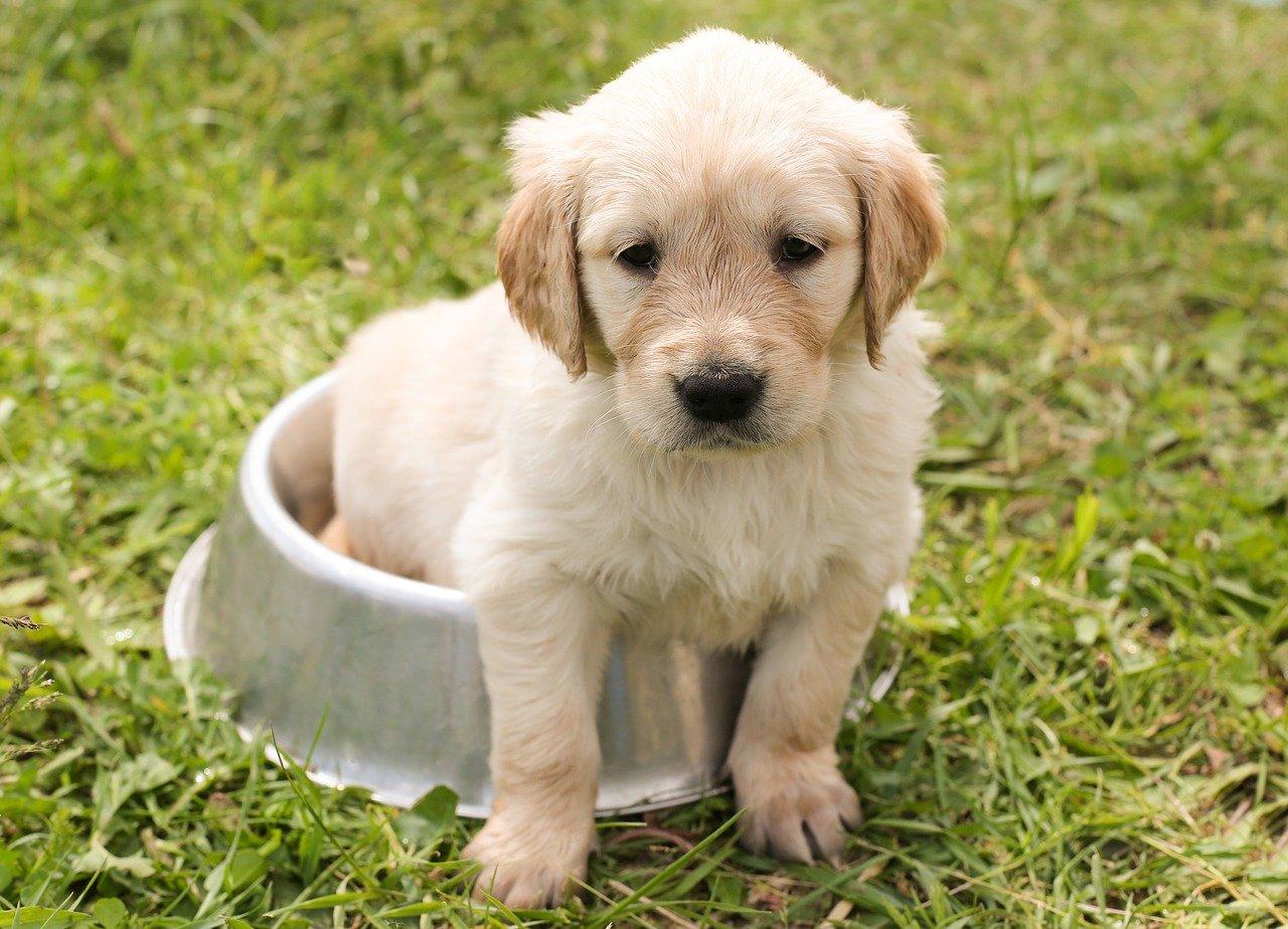 容器に後ろ足を入れる子犬