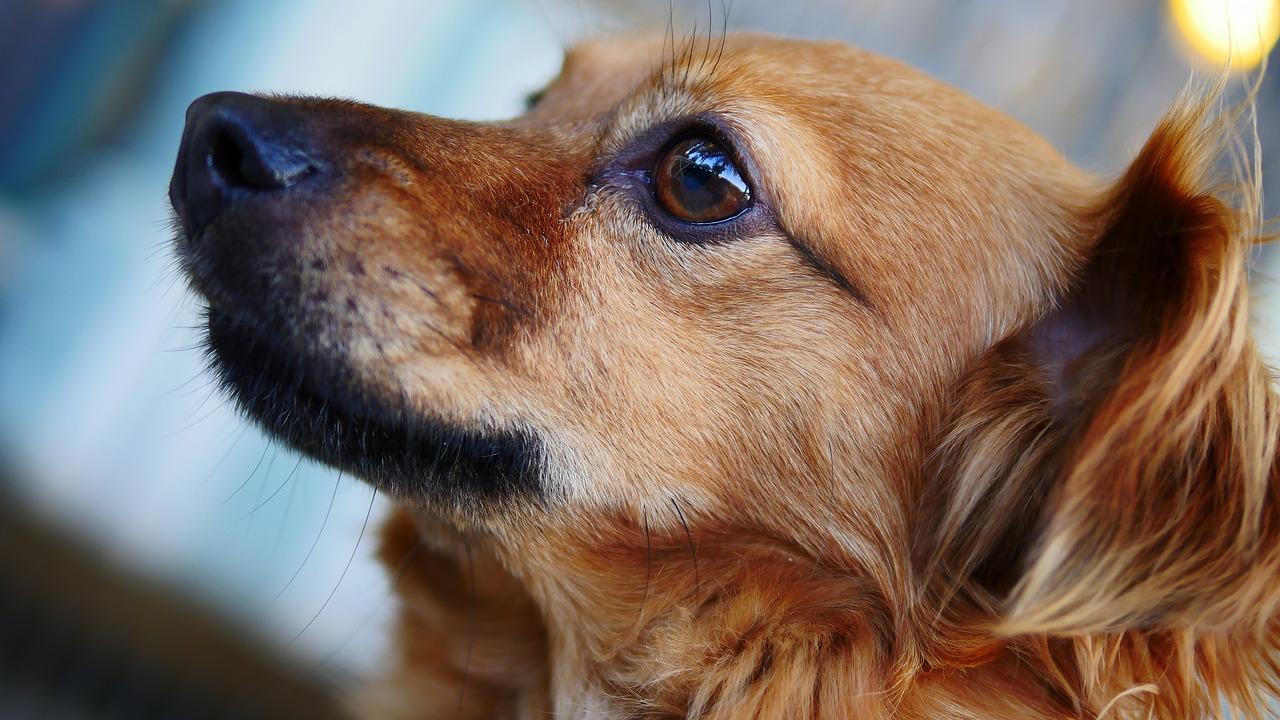 可愛らしい目をした犬