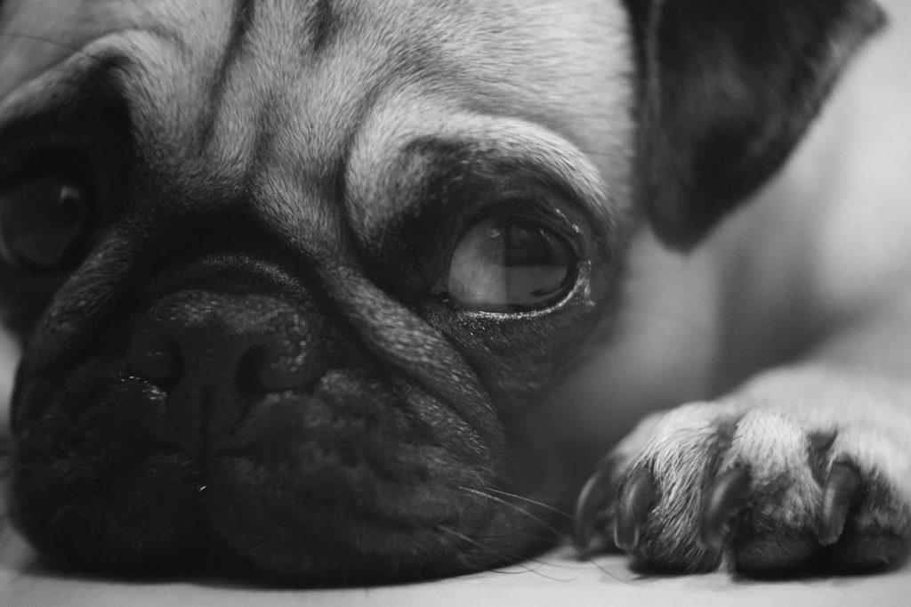 犬 目やに 臭い