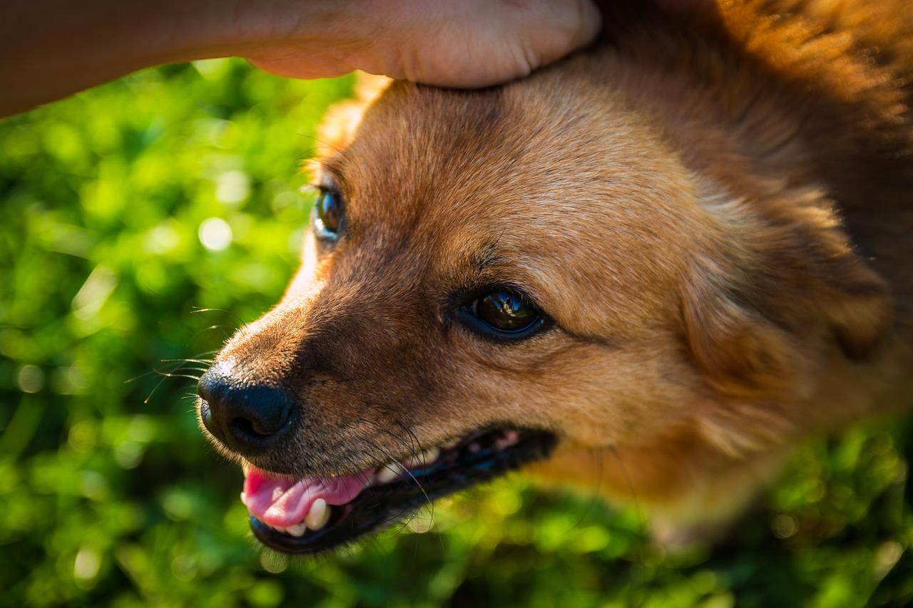 頭を撫でられる犬