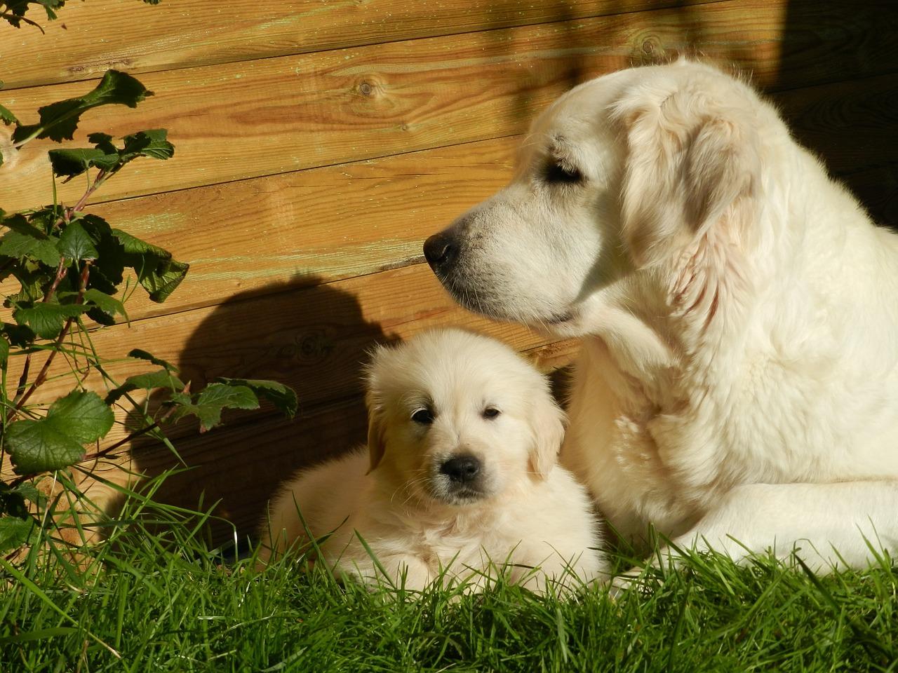 子犬に寄り添う母犬