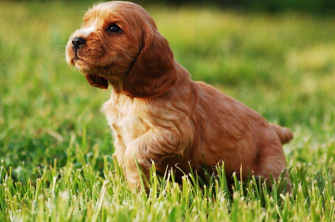 草むらを歩く子犬