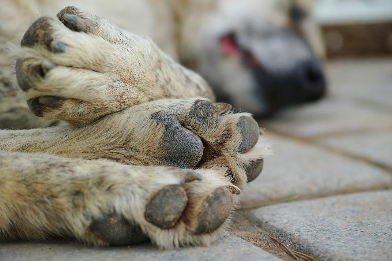 寝ている犬の足