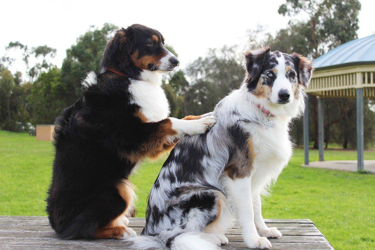 犬が他の犬の背中を押す様子