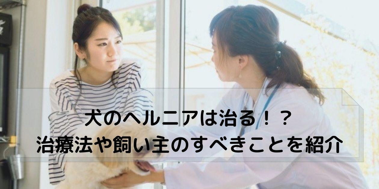 獣医に相談する飼い主