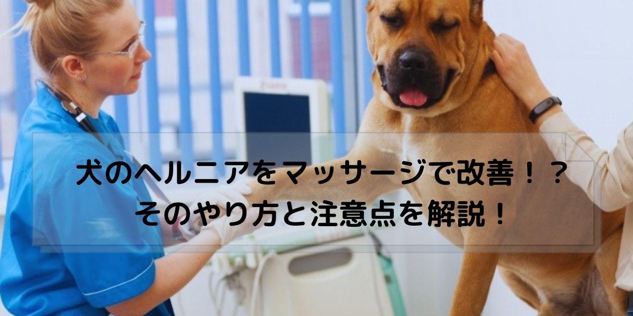 獣医師からマッサージを受ける犬