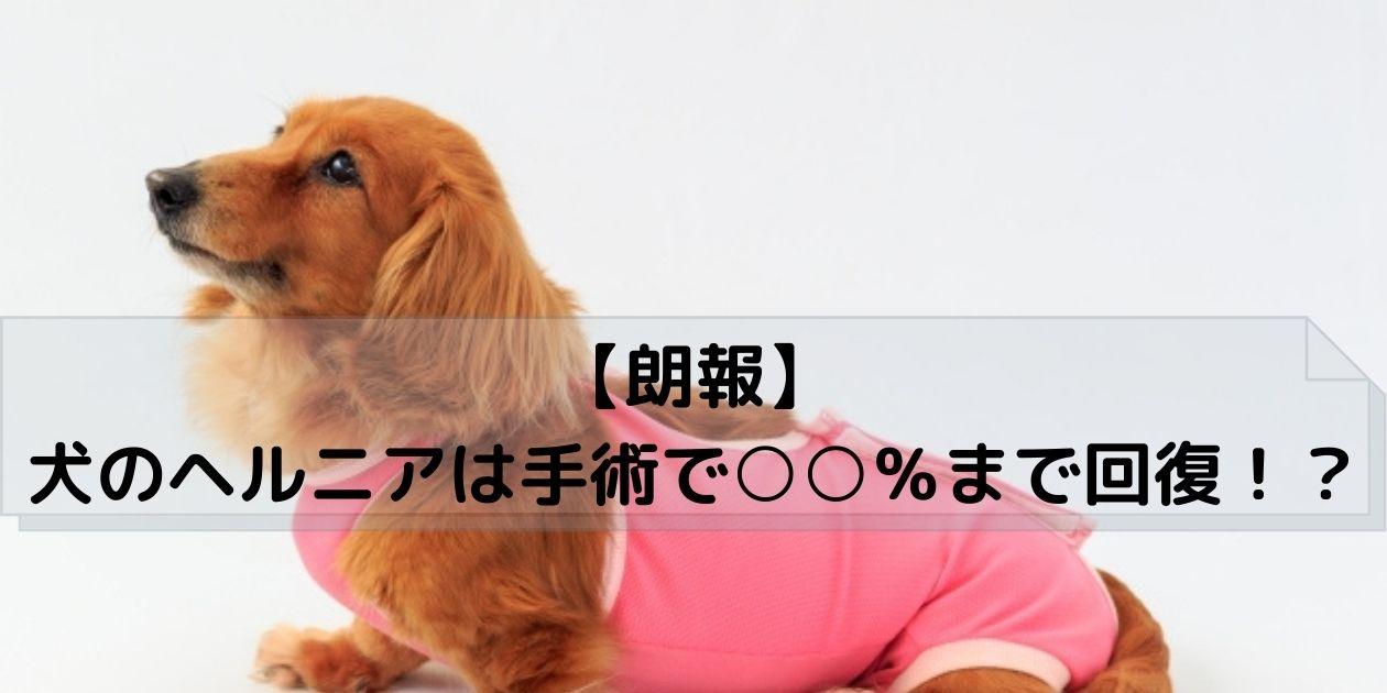 ピンクの服を着てお座りする犬