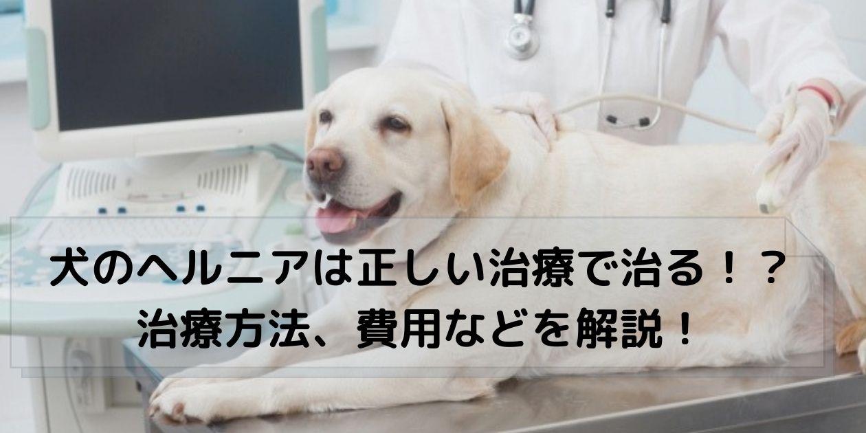 診察してもらう犬