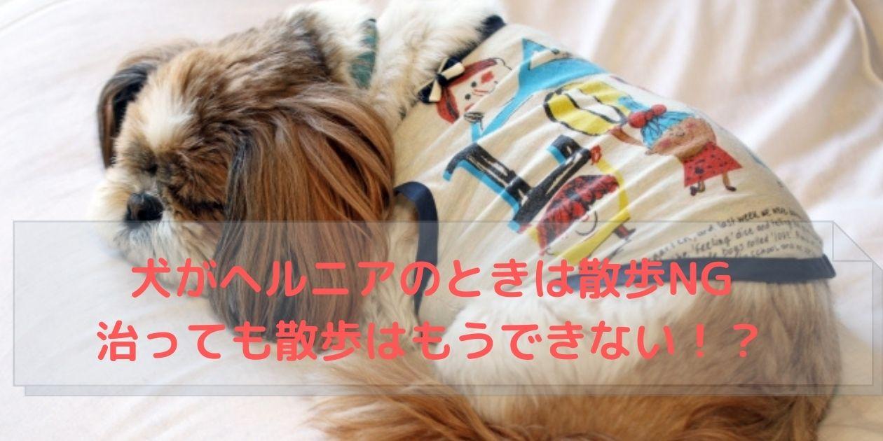 シーツの上で寝る犬