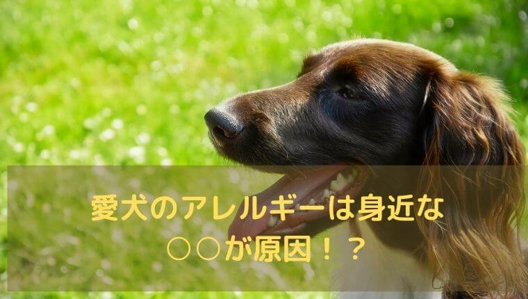 口を開けて呼吸する犬