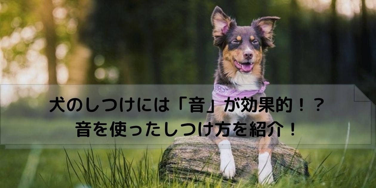 丸太に前足をのせる犬